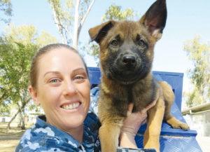 Breeding dogs in the RAAF