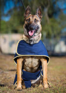 'Yulla' is a new Mum for military working dogs